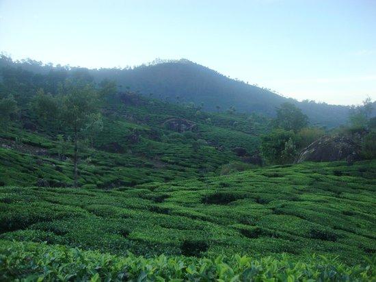 Green Magic Home : nearby tea garden