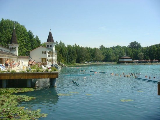 Thermal Lake of Hévíz: Озеро с лотосами