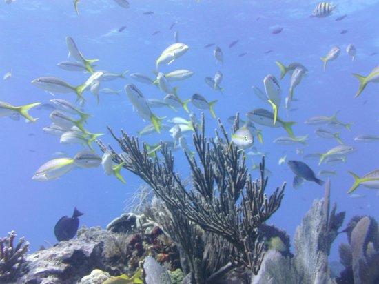 Scuba-Do Dive Company: Key Largo