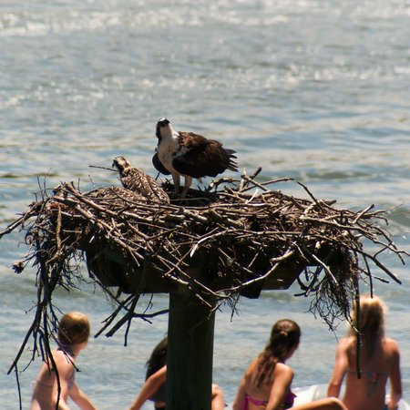 The Tides Inn: Guests in their own dingy checking out an Osprey nest on the Creek!