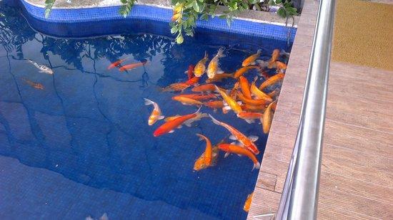 Best Western Premier Maceio: Entrada do hotel - um lago com carpas