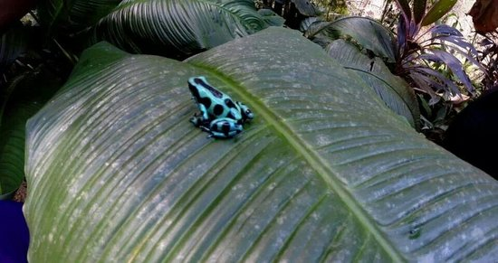 Neo Fauna: Another cool poison dart frog