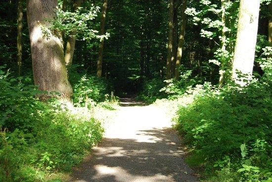Waldhaus: El bosque de Bad Nauheim, donde se encuentra el restaurant.