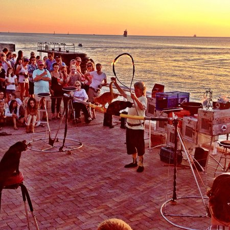 Sunset Pier : Cat Man w his talented cats!