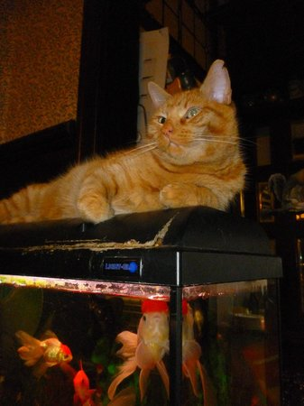 The Red Lion: Winston, aka 'Ginge', the real landlord!