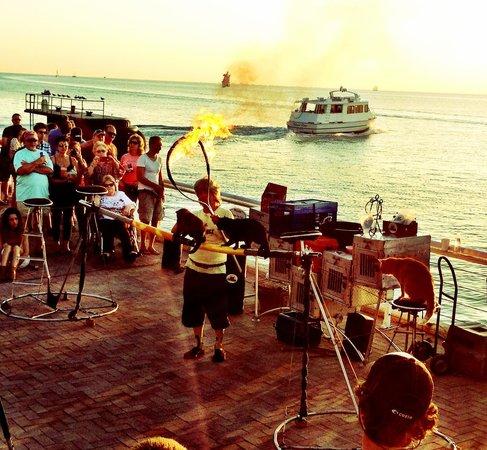 Sunset Pier : Cat Man w his talented cats jump thru hoop of fire.