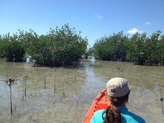 Hilton Key Largo Resort: Kayaking in the Everglades