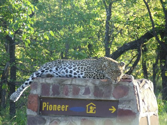 Mopani Rest Camp: Loepard at Mopani