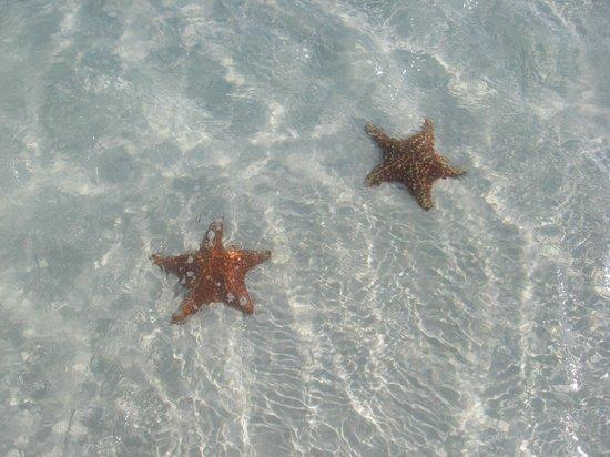 Villa Marinera: des étoiles de mer à la plage Sirena