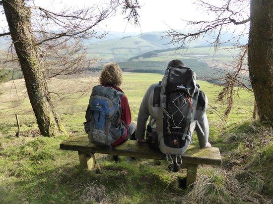 A bench beside Glyndwr's Way