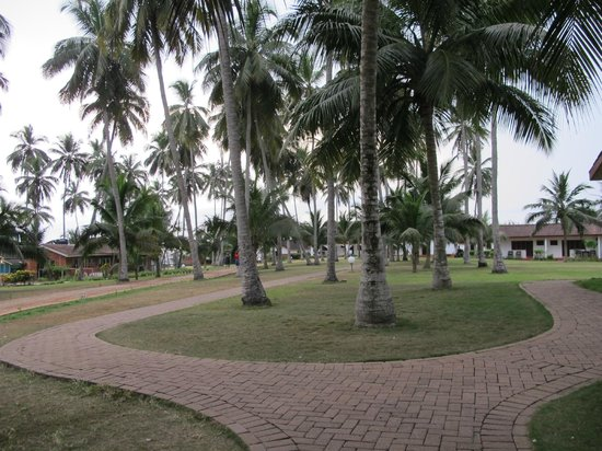 Coconut Grove Beach Resort: Resort Grounds