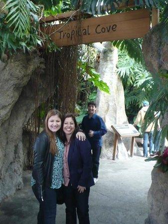 Tennessee Aquarium: Rainforest