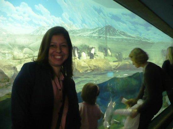 Tennessee Aquarium: Com os sempre amados pinguins