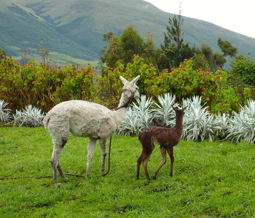Hacienda Santa Ana : Two of our occasional companions