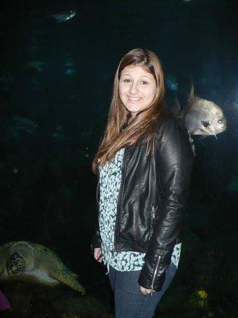 Tennessee Aquarium: Esse eu gosto também