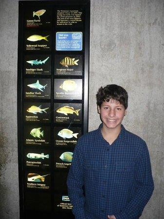 Tennessee Aquarium : Mais peixes