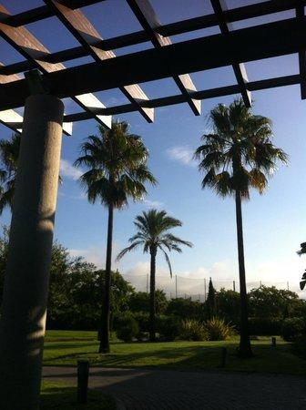 Precise Resort El Rompido - The Hotel: grands palmiers vus de l'entrée