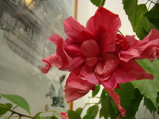 Hotel 16: Flower detail
