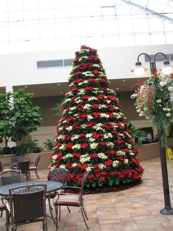 Best Western Plus Lamplighter Inn & Conference Centre: The hotel was beautifully decorated for Christmas...this is near the pool