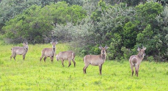 Oceana Beach and Wildlife Reserve : Drive