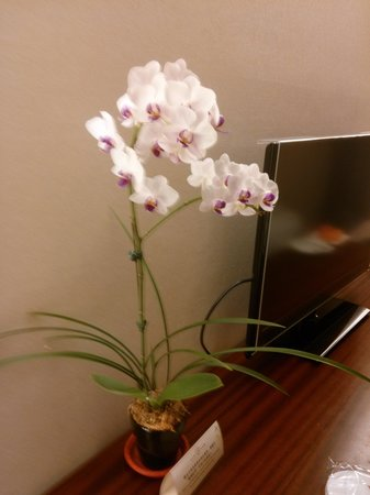 Hotel Del Lago: flower in the room