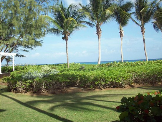 Turtle Beach by Elegant Hotels: the view out of our room, the beach is just over those bushes!