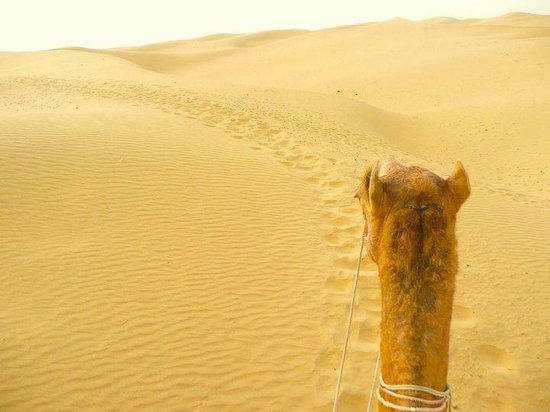 Jaisalmer Desert Camp : Camel Ride (by www.dont-complain.com)
