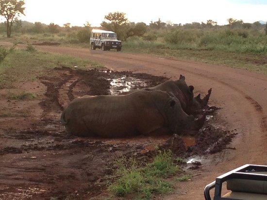 Madikwe River Lodge: Rhinos