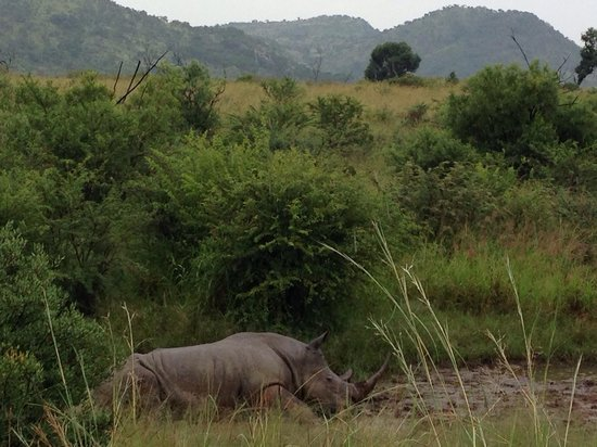 Golden Leopard Resort - Manyane: Rhino