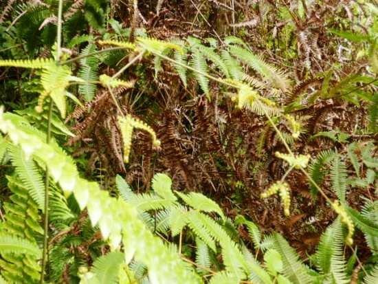 Lava Tree State Park: 公園内を歩いていると、こんな植物にも目がいく