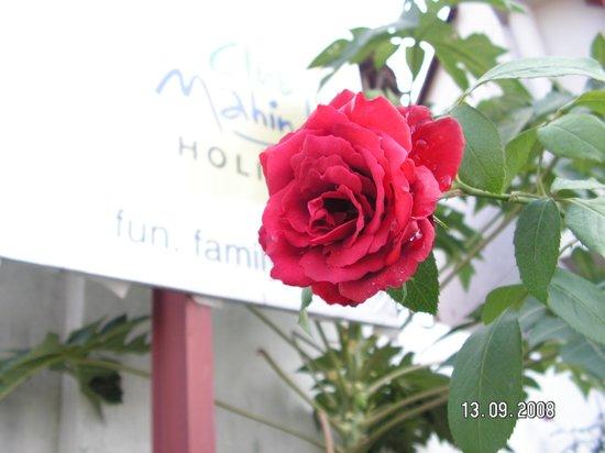 Club Mahindra Dharamshala: flower