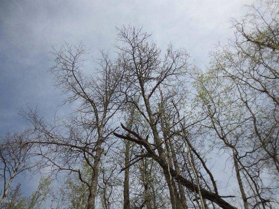 Elk Island National Park: Spring