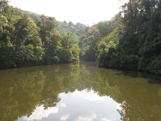 Gavi Forest: Elephant waterhole