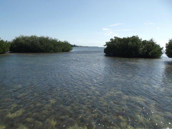 Island Safari Rentals: View on bike ride