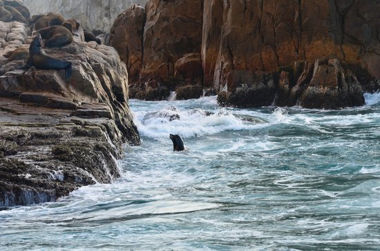 Cabo Sailing Ocean Adventures: Seals at Land's End.