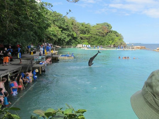 Dolphin Cove: The Dolphin Act