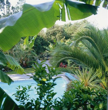 Cary Court Hotel : Sub-tropical garden