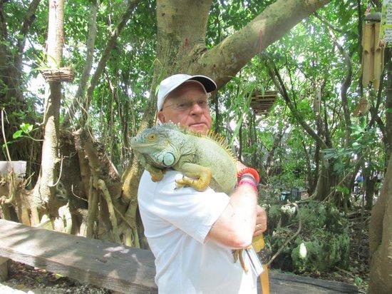 Dolphin Cove: Iguana