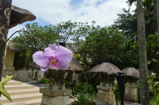 Novotel Bali Benoa : view of hotel