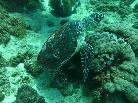 No Gravity Dive Center: turtle