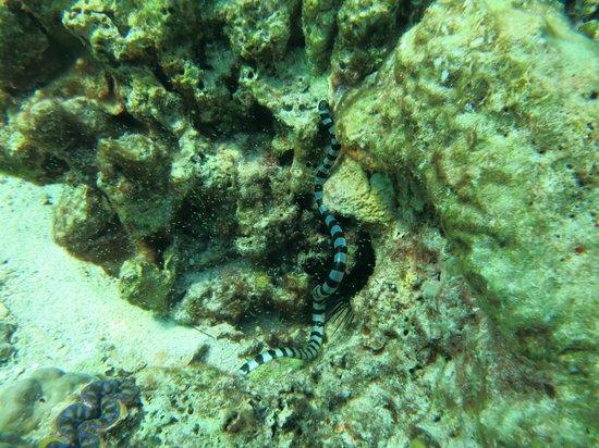 No Gravity Dive Center: sea snake