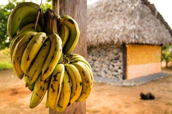 La Pepita de Maranon: Bananas