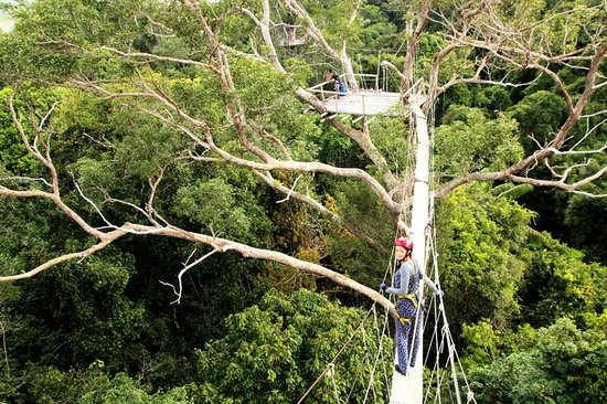 Reserva Natural Palmari: Высота 40 метров. Иду кататься на канопи
