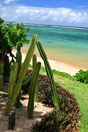 Sofitel So Mauritius : Plage du So.