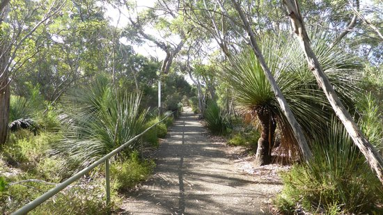 Kelly Hill Conservation Park and Caves : Walking up to the Cave entry