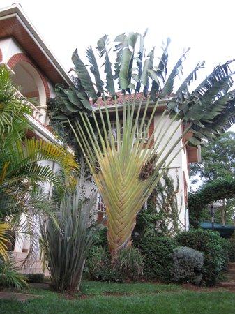 Boni Homestay: Hotel im Grünen