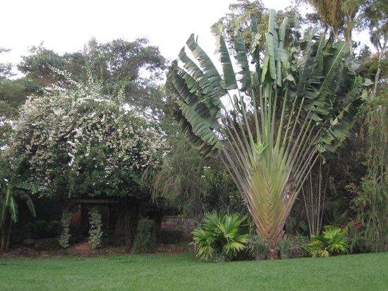 Boni Homestay: Garten