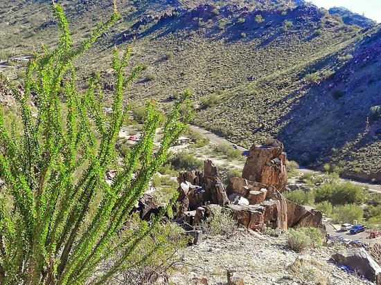 Piestewa Peak: Healthy ocotillo and Vishnu Schist boulders along the trail during descent