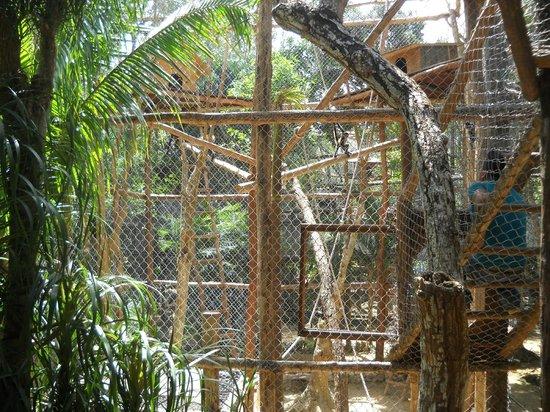 The Jungle Place - Tours: une partie des cages de singes