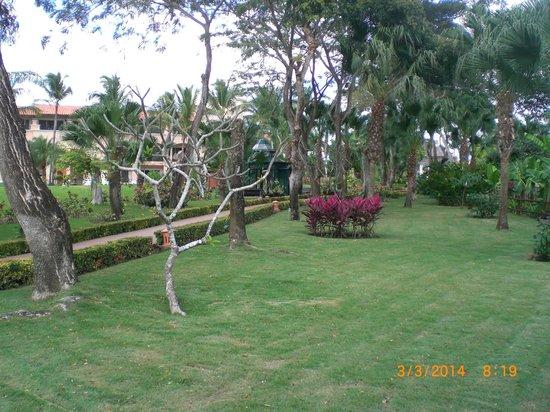Iberostar Hacienda Dominicus : Jardinn